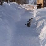 iarna-2010-044